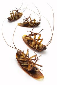 Cockroach Extermination in Atlanta