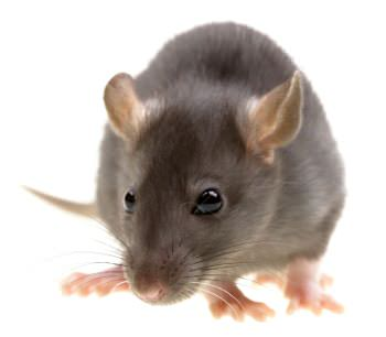 Pest Control Atlanta, Marietta, Carrollton | Pest Extermination